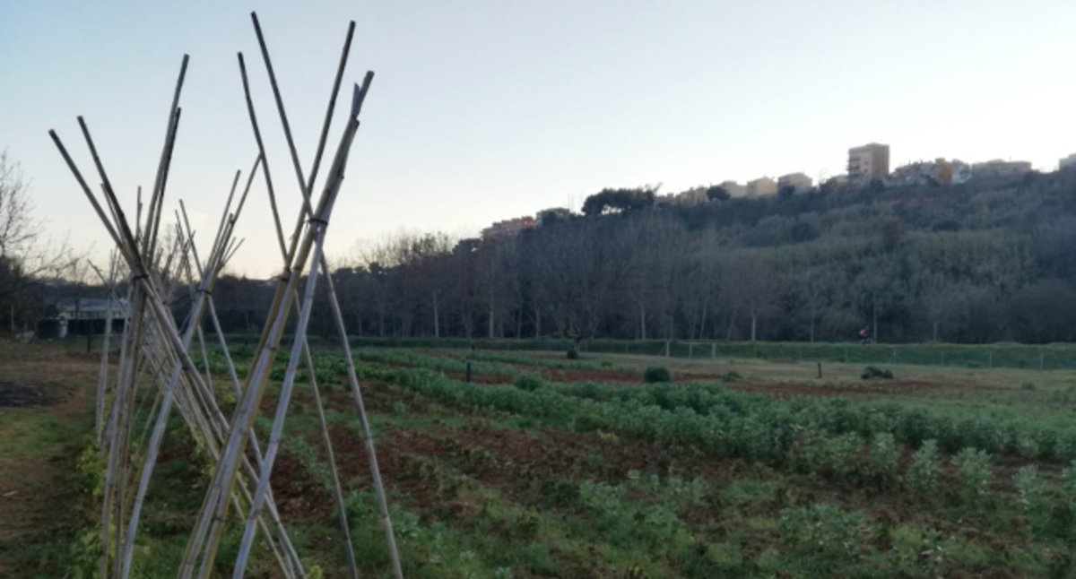 Sabadell cedeix tretze horts municipals a Romau a persones amb rendes baixes