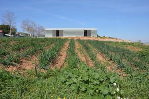 Los huertos municipales están ubicados en la zona de Cova Solera