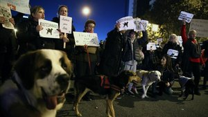 """El Pacma reuneix 230.000 firmes per demanar """"justícia"""" per a la gossa Sota"""