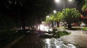 La caída de árboles en la capital provocó el corte de energía.