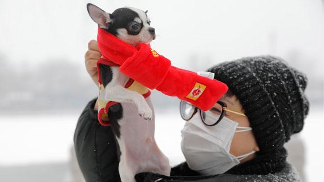 Las mascotas, víctimas de un coronavirus del que no se pueden contagiar.