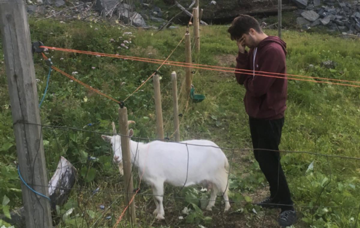 Un pastor desaparecido y cabras en la ducha: la experiencia de dos españoles en una granja de Noruega