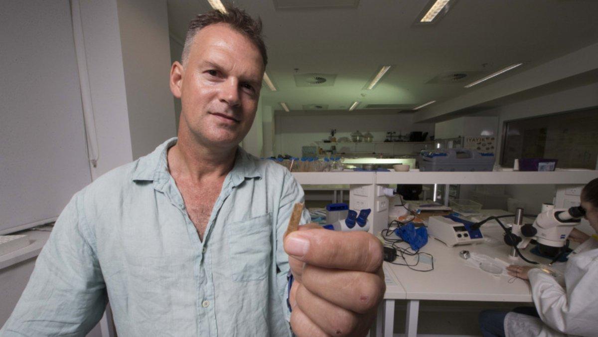 Geoffrey Clark, experto de la ANU, refiere que a estas herramientas que sirven para realizar los diseños lineales de los tatuajes de la Polinesia.