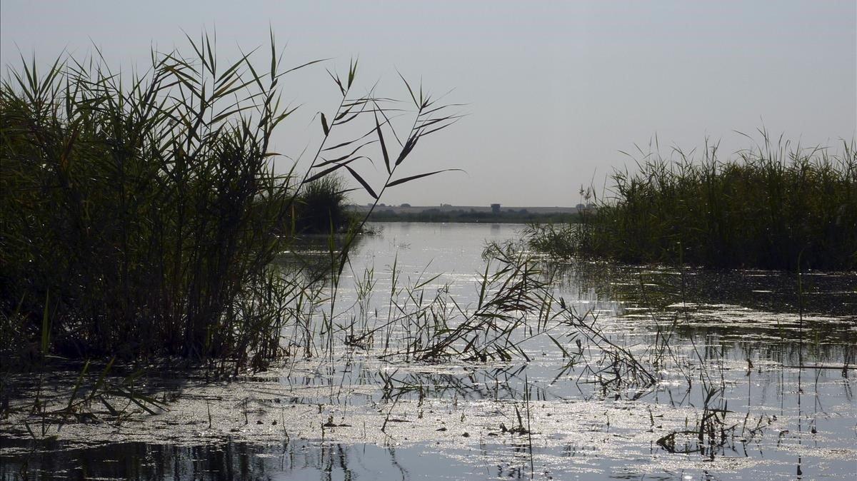 Els ecosistemes naturals alliberaran més metà a causa de l'escalfament global