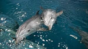 Delfines en el zoo de Barcelona en el 2006.