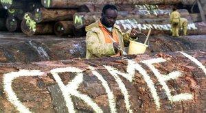 Un activista se manifiesta contra la desforestación .
