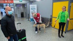 La perra Kossi, en el aeropuerto preparada para detectar coronavirus a los pasajeros a través del olfato.