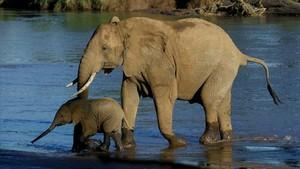 Un elefante y su cría en unparque africano.