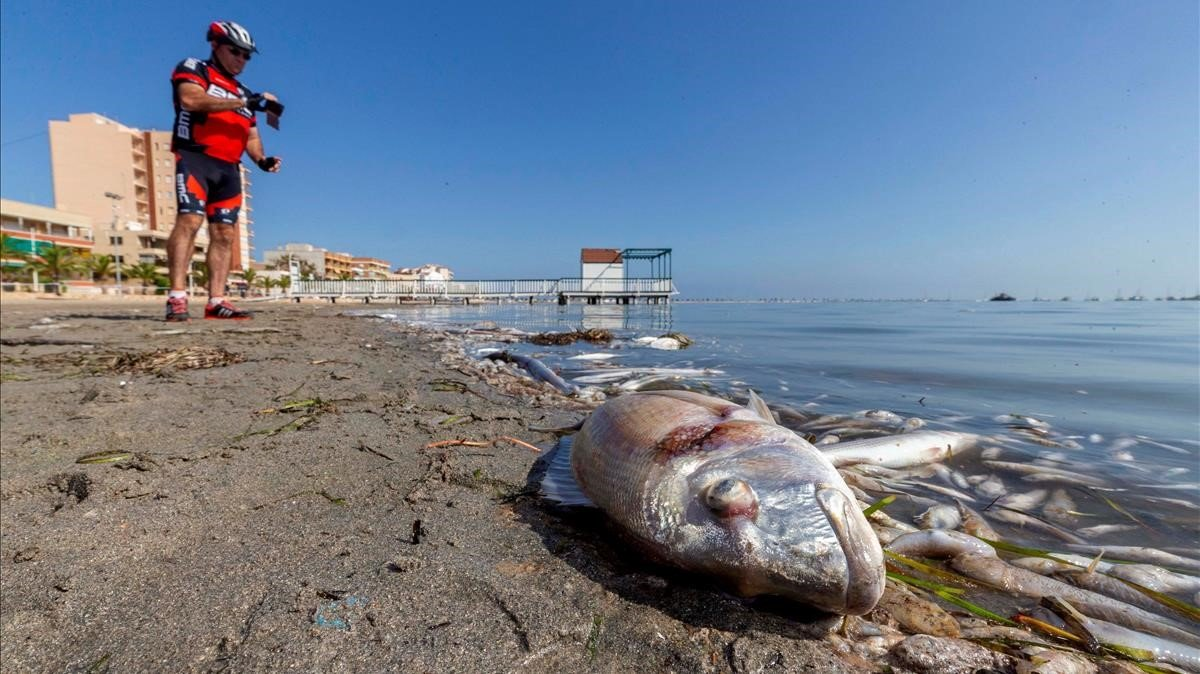 Centenares de peces muertos en la playa de San Pedro del Pinatar, en Murcia, el domingo pasado.