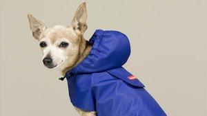 Tiendas como Caninetto venden ropa para perros, incluso a hecha medida.