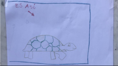 Una nena perd la seva tortuga i mobilitza tot el poble per trobar-la