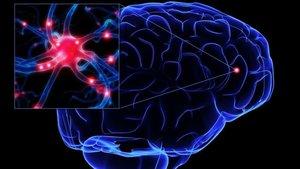 Investigadors dissenyen pròtesis neuronals que reemplacen parts del cervell danyats
