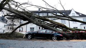 Un árbol caído sobre un coche en Dortmund (Alemania), el 18 de enero.