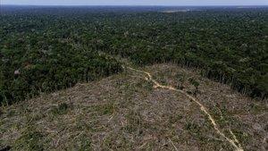 Barrera entre el territorio deforestado de la Amazonia brasileña y la selva tropical