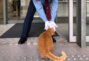 La historia de los dos gatos que llevan dos años intentando entrar a un museo