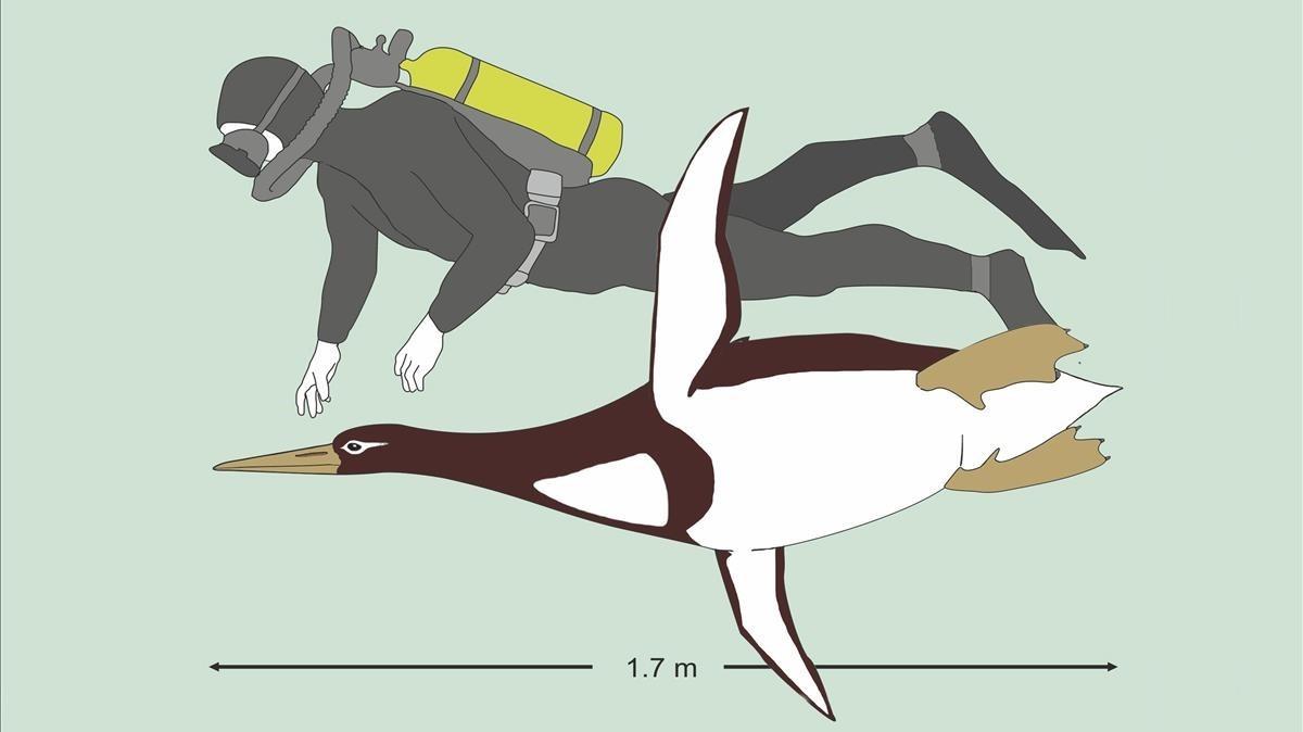 Reconstrucción artísticadel pingüino 'Kumimanu biceae' junto a un buceador.