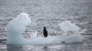 Un pingüino se posa sobre un iceberg en el sur de laAntártida.