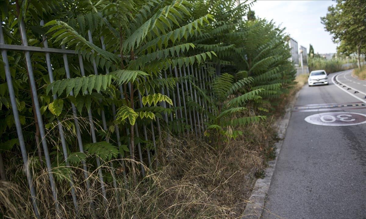 La vegetación está muy presente en el paseo de la Circunvalación.
