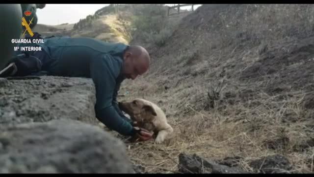 Perro rescatado por la Guardia Civil incencio Canarias