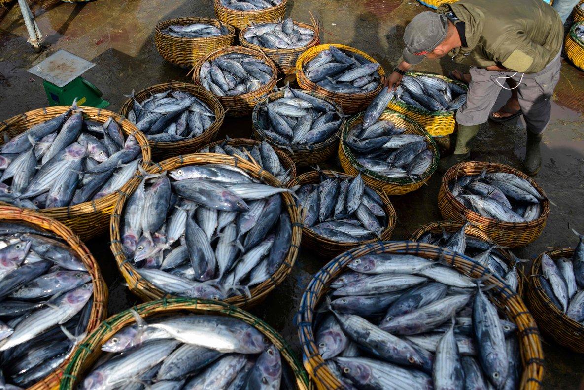 Los retos contenidos en el ODS 14 buscan preservar la vida submarina.