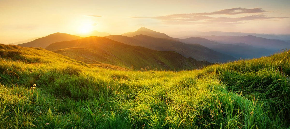 Soluciones de la naturaleza: La mejor aliada