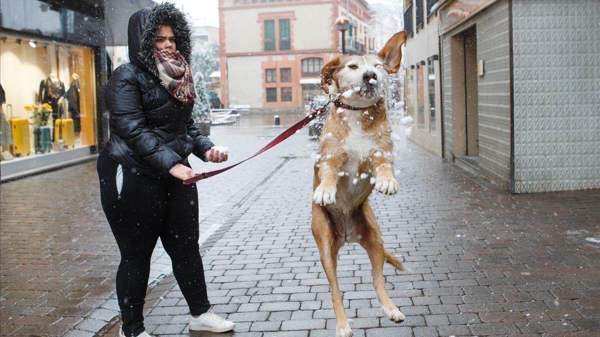 Un gos juga amb els flocsde neual centrede Cardedeu.