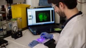El nuevo trabajo presenta el primer ejemplo de fotofarmaco, el JF-NP-26, que actua como analgésico.
