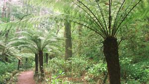 Helechos gigantes en un parque de Portugal.