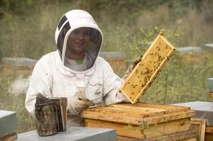 «Le pedía que me pagara con abejas, no con dinero»
