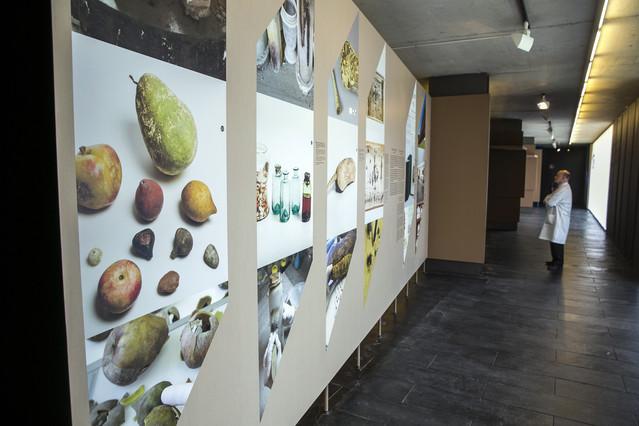 Diverses fotografies explicatives de lexposició Salvadoriana, el gabinet de curiositats de Barcelona.