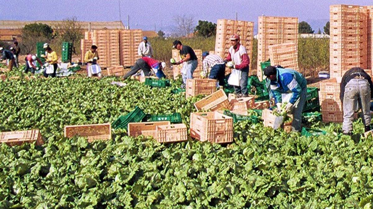 Trabajadores en el campo de Lorca (Murcia) en una imagen de archivo.