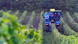Un tractor cosechando la uva.