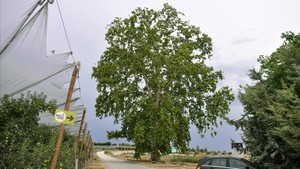 El poder de los árboles