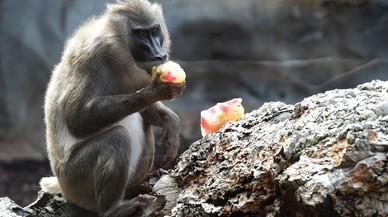 Así se refrescan los animales salvajes del Bioparc de València