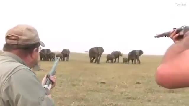Cazadores disparan un elefante, lider de una manada y estos se revuelven