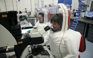 Científicos australianos investigan al coronavirus.