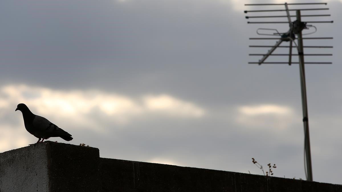 Imagen de archivo de una paloma en la azotea de un edificio