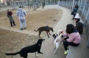 La zona de recreo para perros de Nou Barris, en Barcelona, se estrenó en 2017.