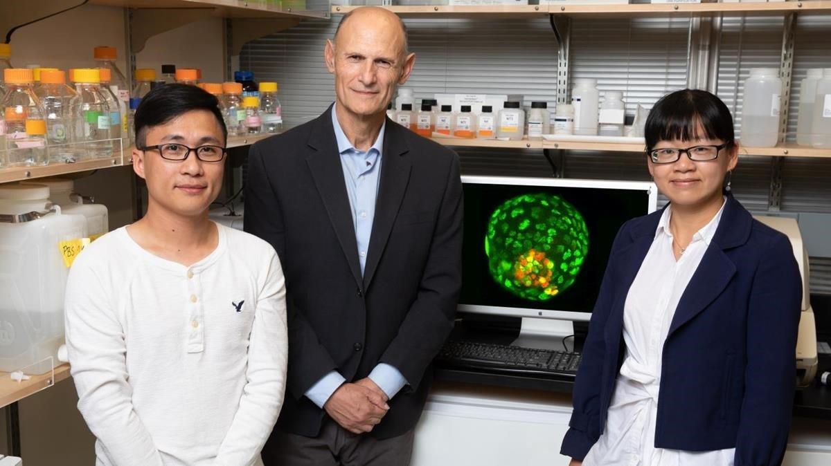 Los investigadores Ronghui Li, Juan Carlos Izpisua Belmonte y Cuiqing Zhong ante la imagen de un blastoide obtenido a partir de una única célula de ratón