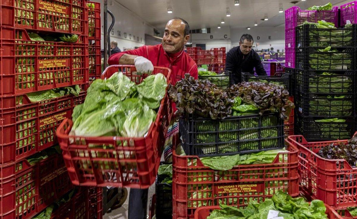 El agricultor Pepe Velarte moviendo sus lechugas en la 'Tira de Comptar' en València