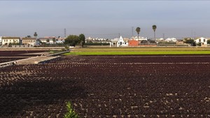 Vista general de la Huerta de Alboraya, en Valencia.