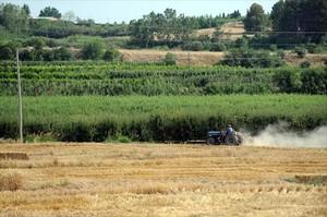 Campo 8 Un agricultor trabaja en unos terrenos de Lleida.