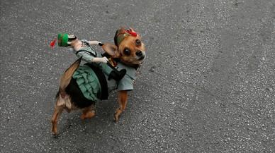 La perra Golfa vestida de legionaria, durante lel traslado del Cristo de Mena.