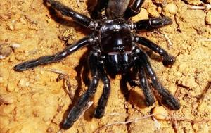 Númerp 16,la araña más longeva de la que tengamos constancia