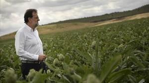 El líder del PP, Mariano Rajoy, en una visita este miércoles a una plantación de alcachofas.