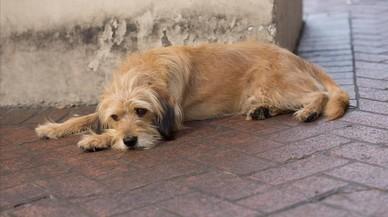 Crítica de 'Benji': una aventura canina con demasiados trucos fáciles