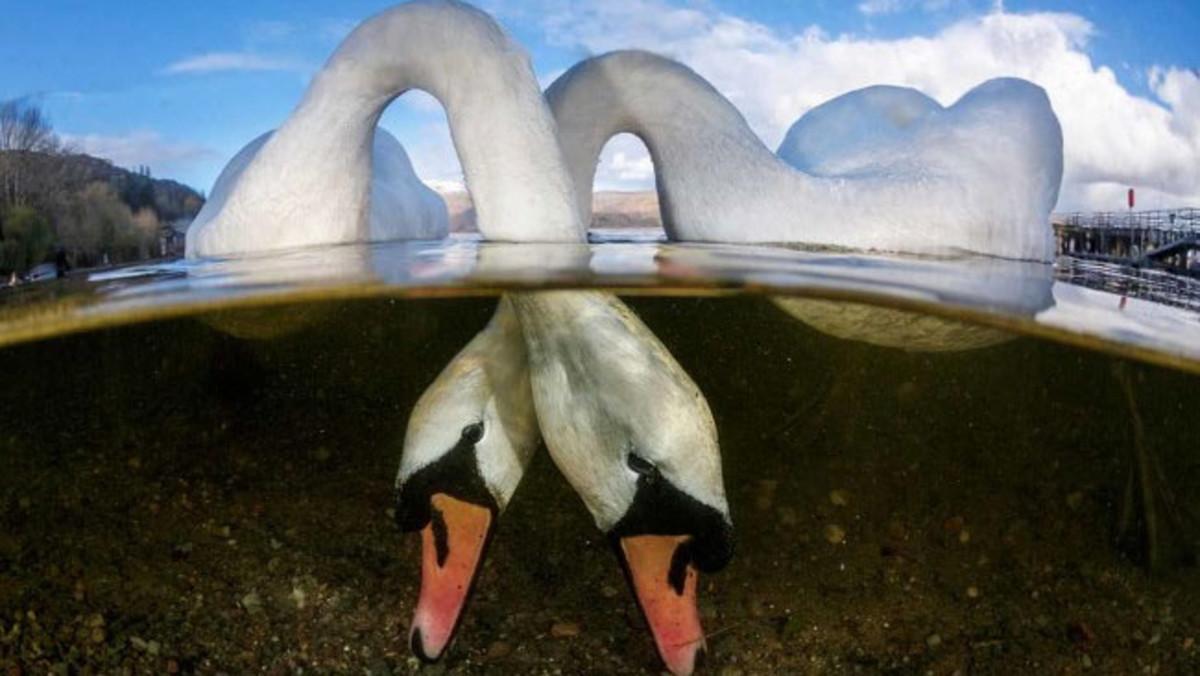 Viajar - Love Birds, fotografía tomada en Loch Lomond, Escocia.
