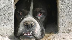 Un perro abandonado en Madrid en una imágen de archivo.