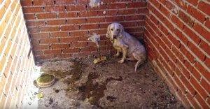 Estado en el que se encontraba uno de los animales en la 'Finca de los Horrores'.