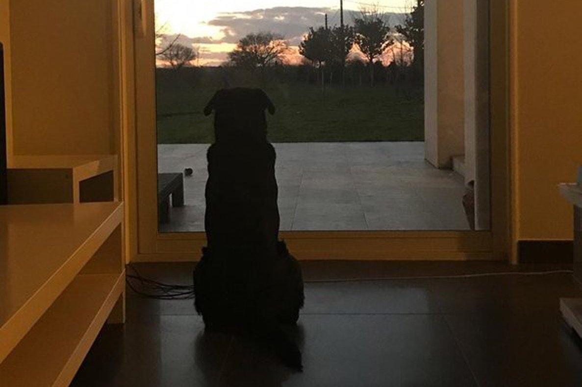 El perro de Emiliano Sala, junto a la ventana.